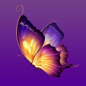 蝴蝶飞直播平台v1.1.4最新版