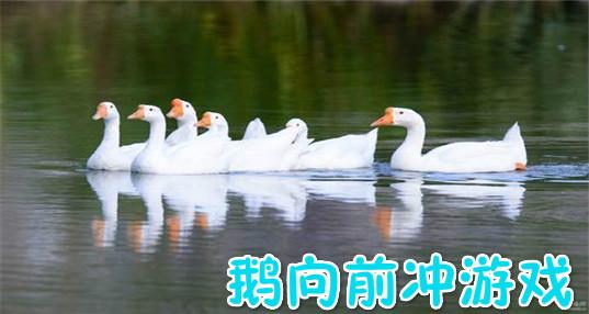 鹅向前冲游戏