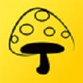 蘑菇丁 v2.5.11